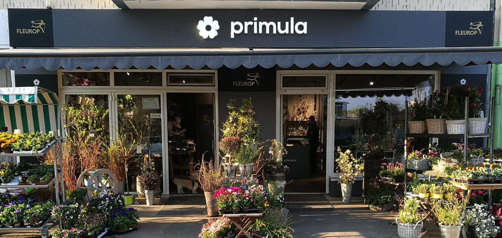 Ladengeschäft Primula